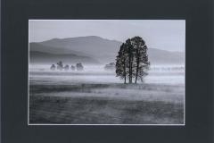 DELL'IRA LAURA (Nebbia mattutina)