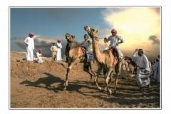 A_Montini Giulio_Camel race 1